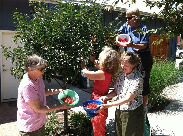 cohousing-solidaridad